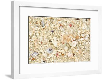 Shells Stranded Sealife Washed Ahore a White--Framed Photographic Print