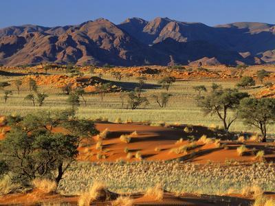 Namib Rand View over Red Dunes and Savanna--Photographic Print