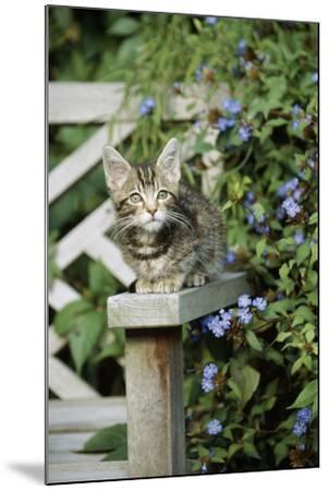 Tabby Kitten--Mounted Photographic Print