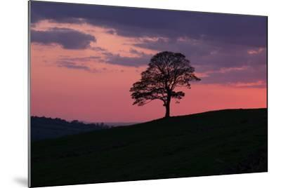 Another Day Passing-Doug Chinnery-Mounted Photographic Print