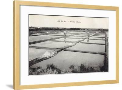 Salt on Ile de Re--Framed Photographic Print