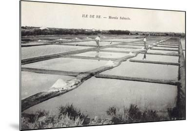 Salt on Ile de Re--Mounted Photographic Print