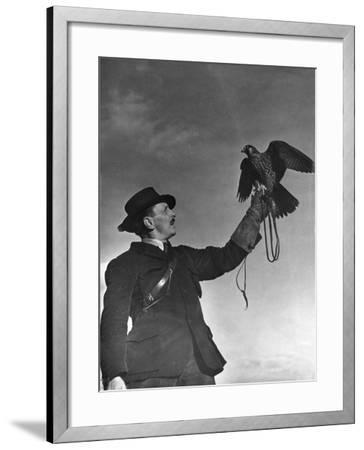 Falconry: Showing Off--Framed Photographic Print
