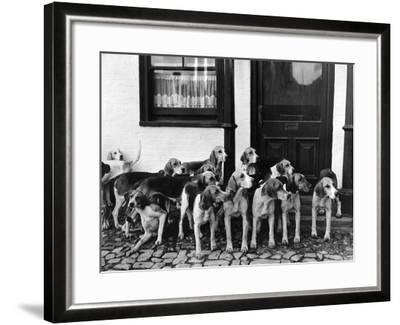 Tickham Foxhounds--Framed Photographic Print