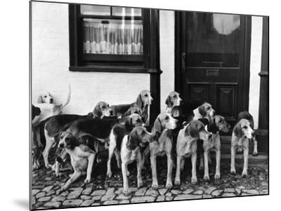 Tickham Foxhounds--Mounted Photographic Print