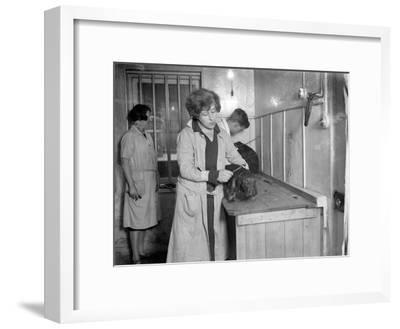 Pampered Pets--Framed Photographic Print