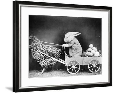 Rabbit in Hen Cart--Framed Photographic Print