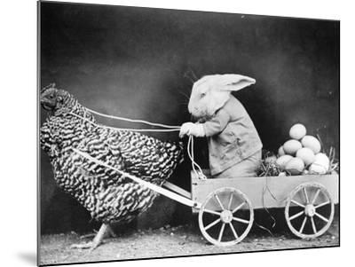Rabbit in Hen Cart--Mounted Photographic Print