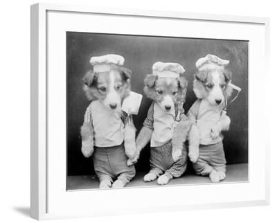 Dogs as Chefs--Framed Photographic Print