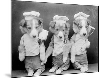 Dogs as Chefs--Mounted Photographic Print
