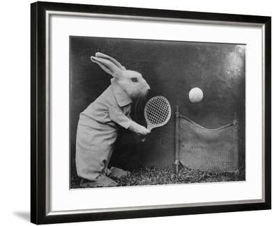 Bunny Tennis--Framed Photographic Print
