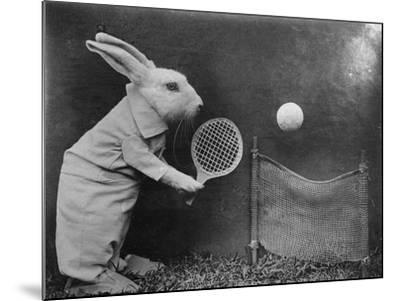 Bunny Tennis--Mounted Photographic Print