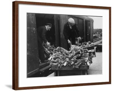 Rabbits for Market--Framed Photographic Print