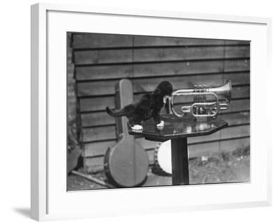 Kitten Trumpeter--Framed Photographic Print