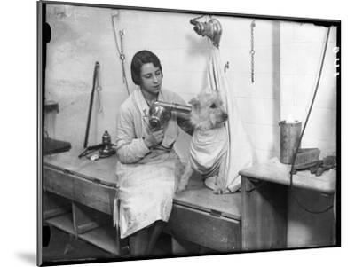 Poodle Parlour 1930s--Mounted Photographic Print