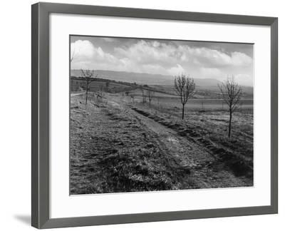 Icknield St. Roman Road--Framed Photographic Print