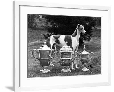 Fall, Crufts, 1956, Greyh'D-Thomas Fall-Framed Photographic Print