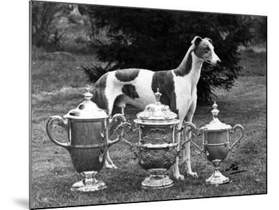 Fall, Crufts, 1956, Greyh'D-Thomas Fall-Mounted Photographic Print