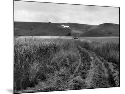 Pewsey White Horse-Fred Musto-Mounted Photographic Print