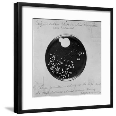 Original Culture Plate--Framed Photographic Print