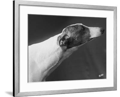 Springtime Owned by Carpenter-Thomas Fall-Framed Photographic Print