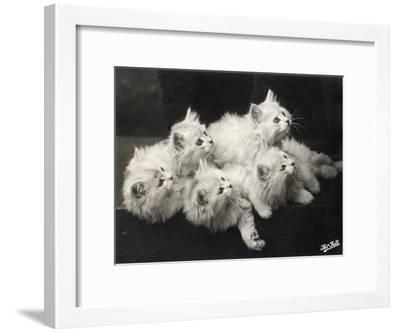 Group of Five Adorable White Fluffy Chinchilla Kittens Lying in a Heap Looking up at Their Owner-Thomas Fall-Framed Photographic Print