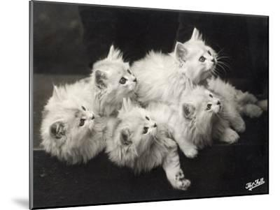 Group of Five Adorable White Fluffy Chinchilla Kittens Lying in a Heap Looking up at Their Owner-Thomas Fall-Mounted Photographic Print