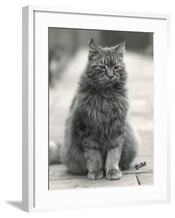 Fluffy Domestic Cat Sitting on the Pavement-Thomas Fall-Framed Photographic Print