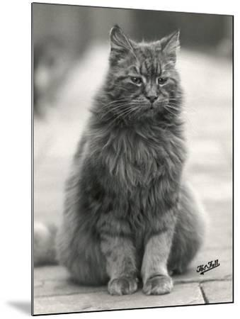 Fluffy Domestic Cat Sitting on the Pavement-Thomas Fall-Mounted Photographic Print