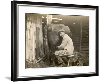 Farmworker Milks a Cow by Hand in a Very Primitive Cow- House--Framed Photographic Print