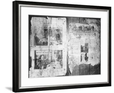 An Antarctic Bystander--Framed Photographic Print