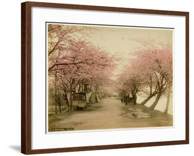 Japanese Cherry Blossom in Mukojima Tokyo Japan--Framed Photographic Print