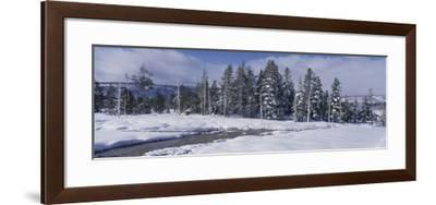 Scenic View of Pine Trees Coated with Snow in Winter-Jeff Foott-Framed Photographic Print