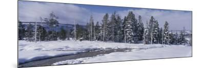 Scenic View of Pine Trees Coated with Snow in Winter-Jeff Foott-Mounted Photographic Print