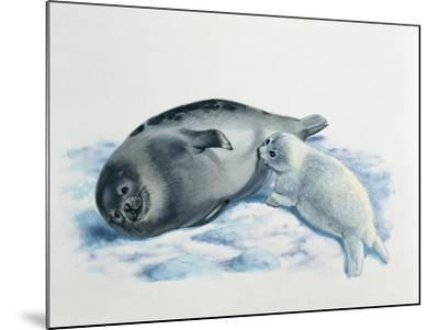 Close-Up of a Female Harp Seal Feeding its Cub (Phoca Groenlandica)--Mounted Photographic Print