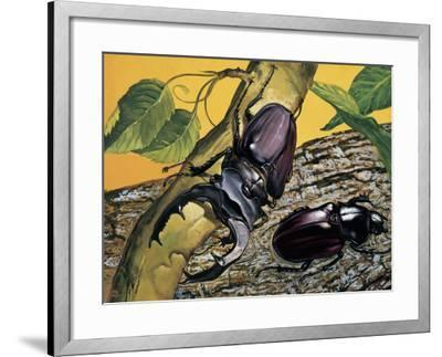 Close-Up of Two Stag Beetles (Lucanus Cervus)--Framed Photographic Print