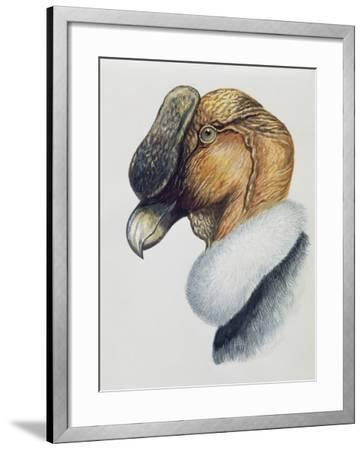 Close-Up of an Andean Condor (Vultur Gryphus)--Framed Photographic Print
