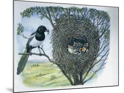 Close-Up of an Australian Magpie Holding an Insect for its Youngs--Mounted Photographic Print