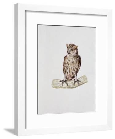 Close-Up of a Great Horned Owl Perching on a Branch (Bubo Virginianus)--Framed Photographic Print