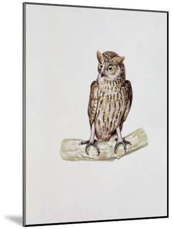 Close-Up of a Great Horned Owl Perching on a Branch (Bubo Virginianus)--Mounted Photographic Print