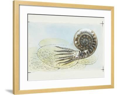 Fossils, Ammonite, Illustration--Framed Photographic Print