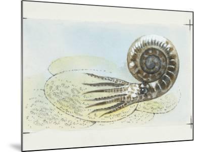 Fossils, Ammonite, Illustration--Mounted Photographic Print