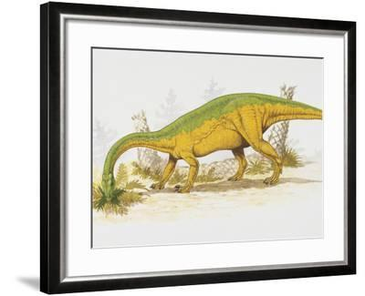 Anchisaurus Eating Plants--Framed Photographic Print