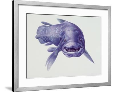 Close-Up of a Coelacanth--Framed Photographic Print