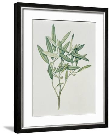 Close-Up of an Oleaster Plant--Framed Photographic Print