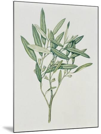Close-Up of an Oleaster Plant--Mounted Photographic Print