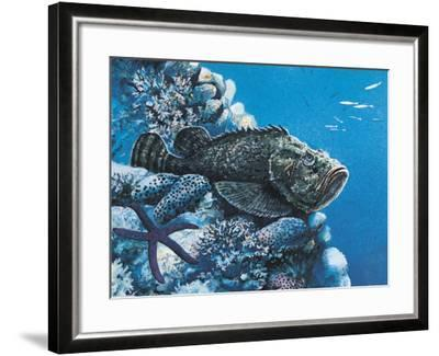 Close-Up of a Stonefish and a Starfish on Rocks Underwater--Framed Photographic Print