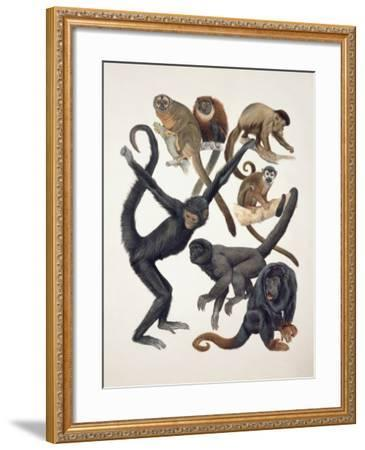 Close-Up of a Group of Primates--Framed Photographic Print