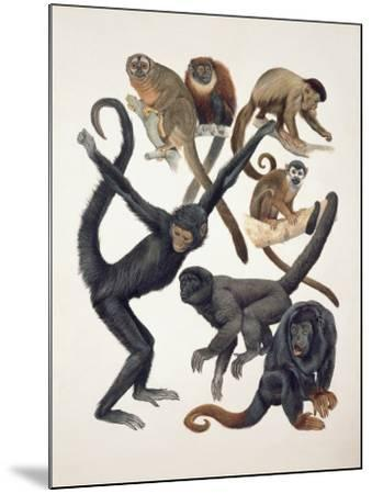 Close-Up of a Group of Primates--Mounted Photographic Print