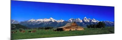 Cattle Gather Near Old Barn on Grand Teton Range in the Spring-Jeff Foott-Mounted Photographic Print